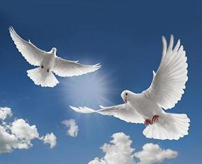 Peace doves.